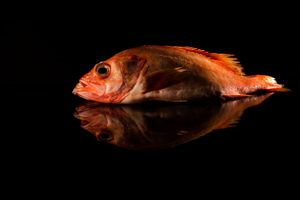 Rantree Maastricht zeebaars, rode vis, food fotografie